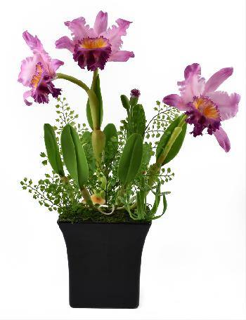 Cattleya Orchid (Pink)