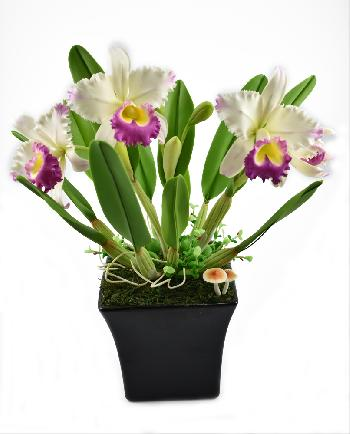 Cattleya Orchid (White)