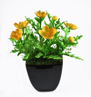 Cosmo Flower (Yellow)