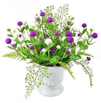 Globe Amaranth (white and Purple)