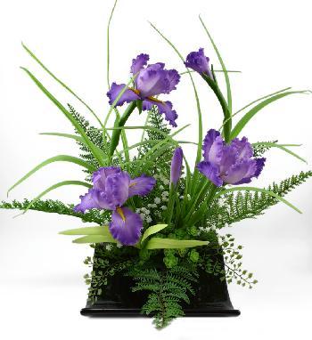 Iris (Purple)