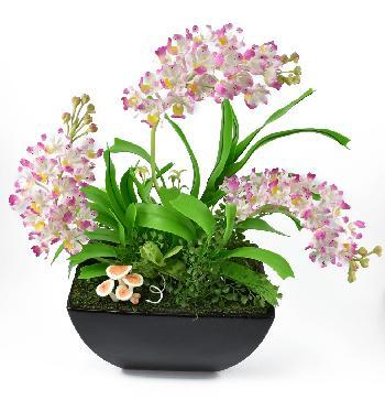 Jungle Orchid (Chang Kra)