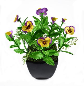Pansy (Purple and Yellow)